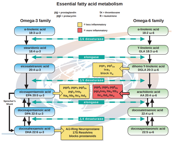 essential fatty acid production and metabolism chart