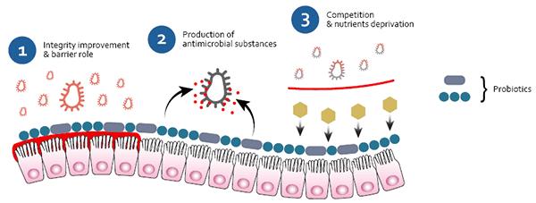 Probiotics Against Pathogenic Bacteria