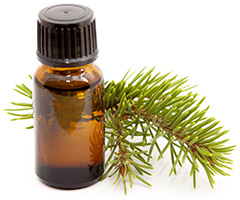 Essential oils from Quebec's boreal forest